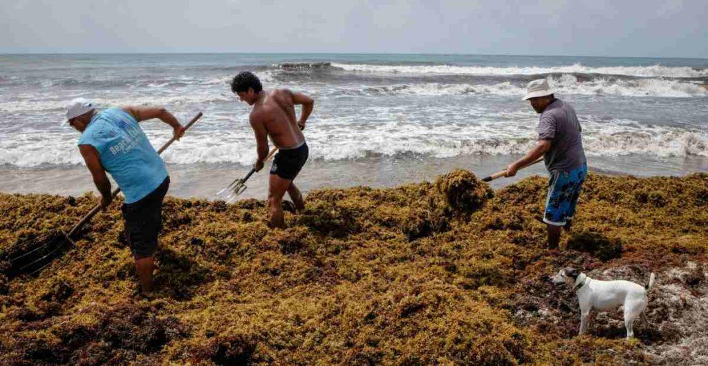Empresarios del Caribe Mexicano lanzan S.O.S para atender problema del sargazo
