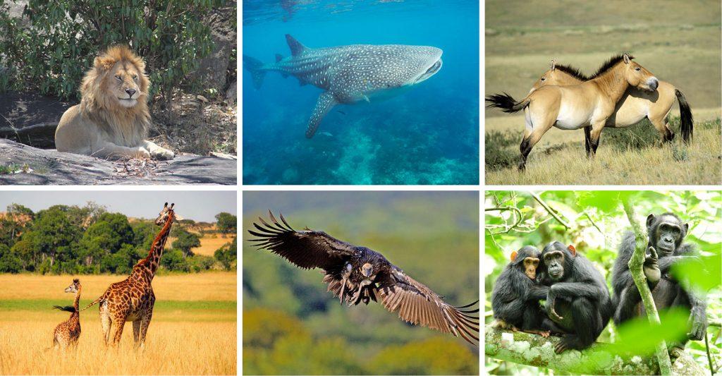Fauna Foto: Internet
