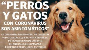 Perros y gatos con coronavirus son asintomáticos