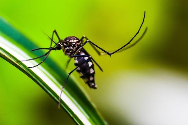 Hoy es Día Internacional contra el Dengue