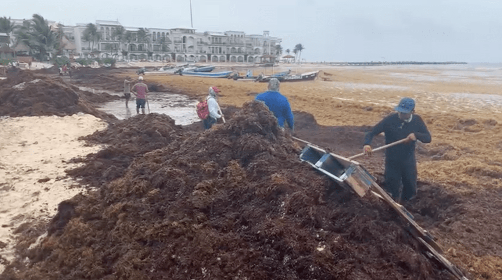 Empresarios urgen que se aclare alerta sanitaria en Quintana Roo por el sargazo Foto: Internet