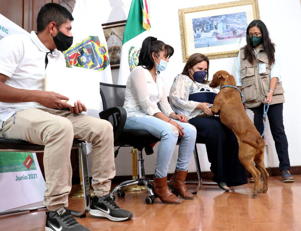 Tras rescatarlo del socavón en Puebla, perrito Spay volvió a casa