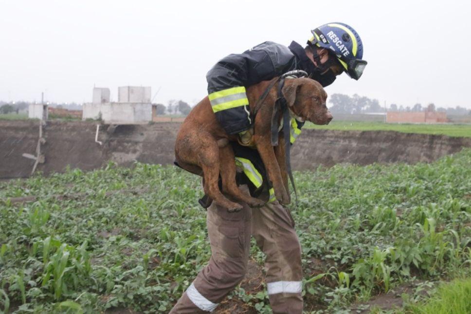 Así fue el rescate de los perritos que cayeron en el socavón de Puebla (Video)