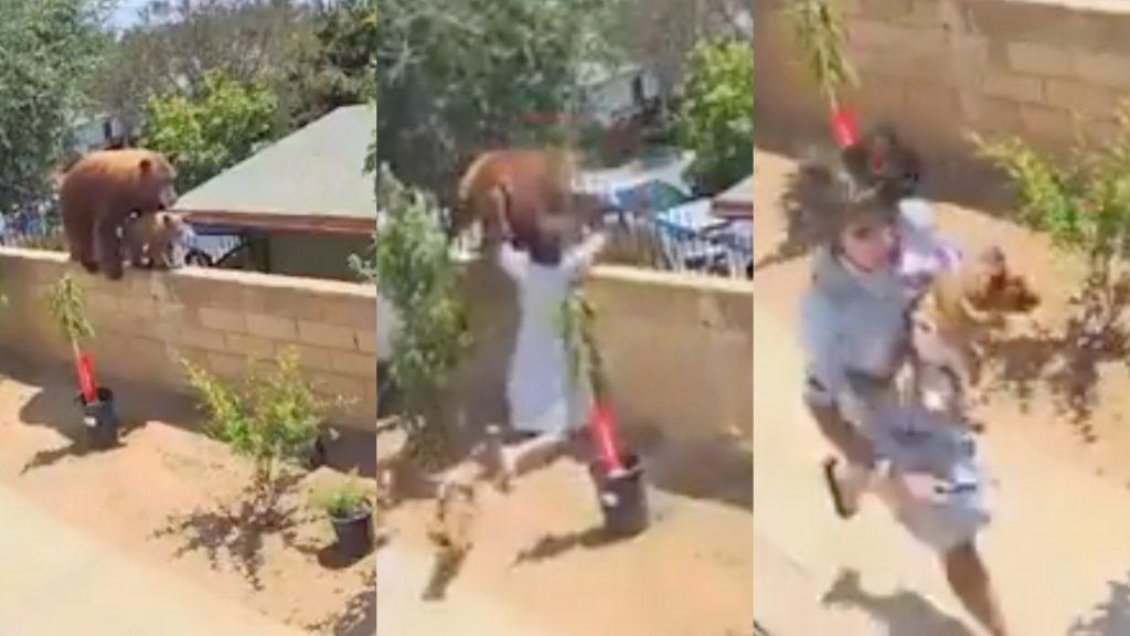 Chica aventó a un oso de la barda de su casa para salvar a sus mascotas (Video)