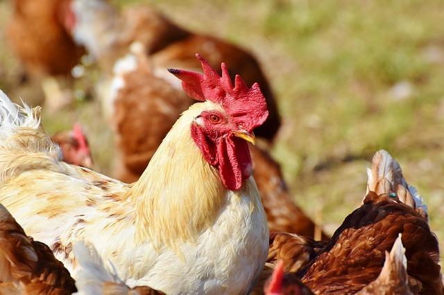 China reporta posible 1er caso humano de gripe aviar H10N3