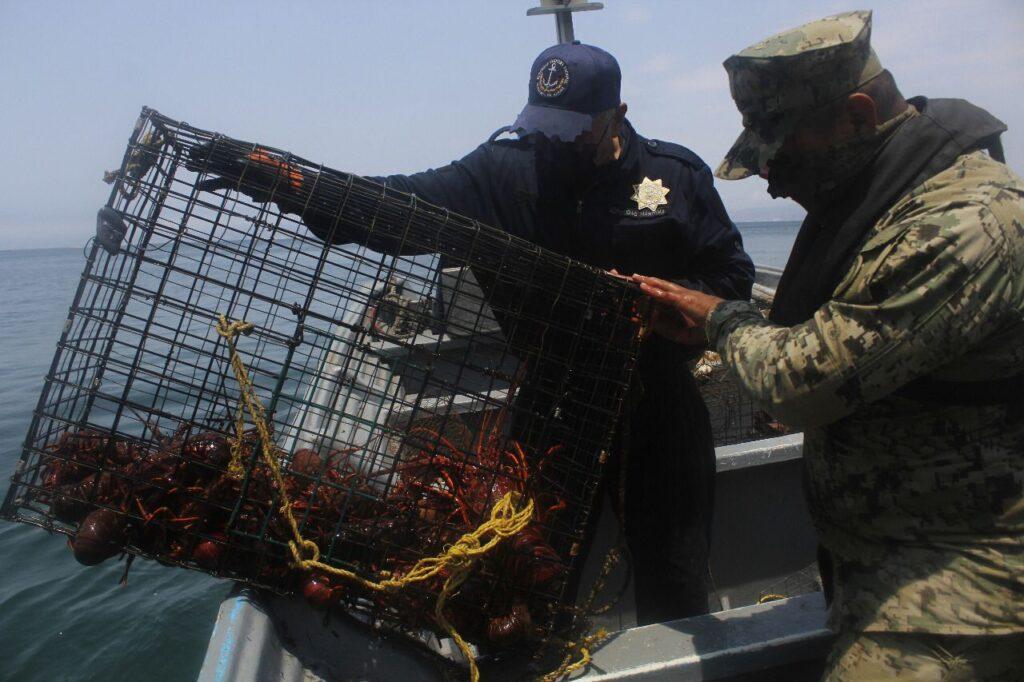 Semar y autoridades aseguraron trampas langosteras y caracol rosado en Baja California y Quintana Roo