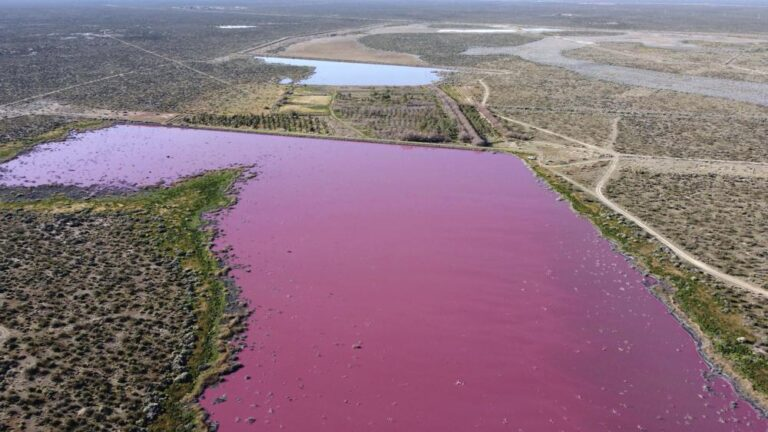 Color rosa de laguna argentina alerta a ambientalistas