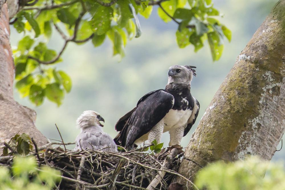 Aves rapaces en declive por pérdida de hábitat y tóxicos