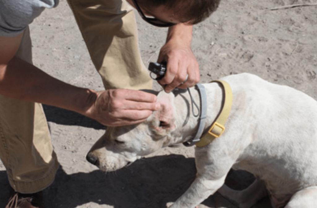 personas-animales Foto: Internet