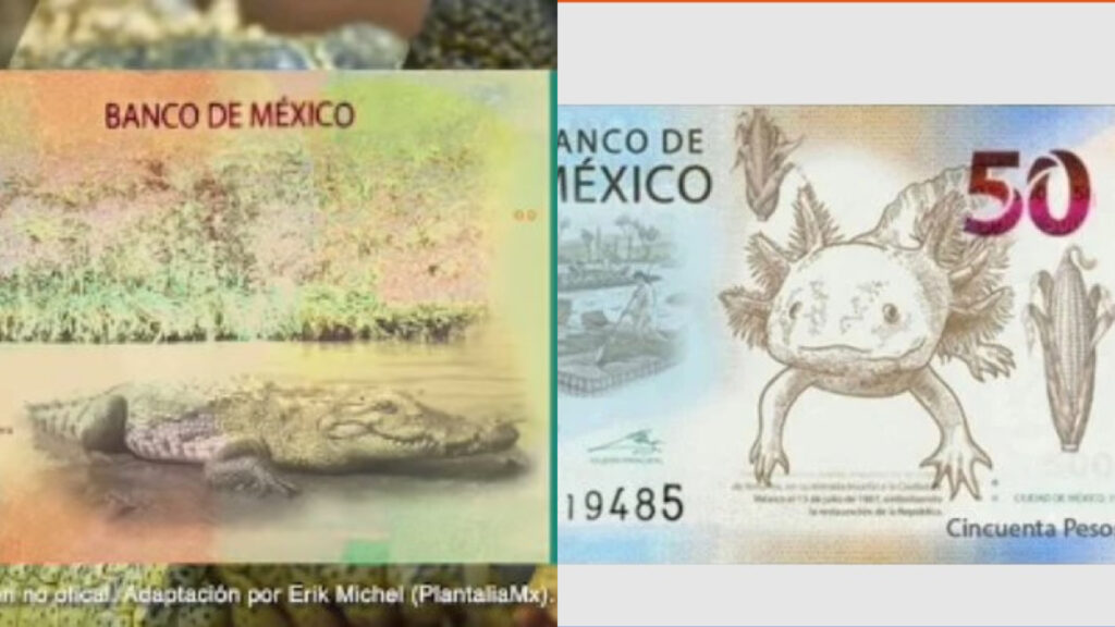 Conoce los nuevos billetes de 20 y 50 pesos