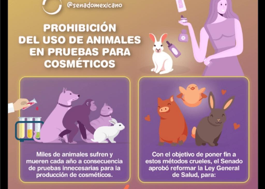 Senado aprueba multa a quien use animales para elaborar cosméticos Foto: @senadomexicano