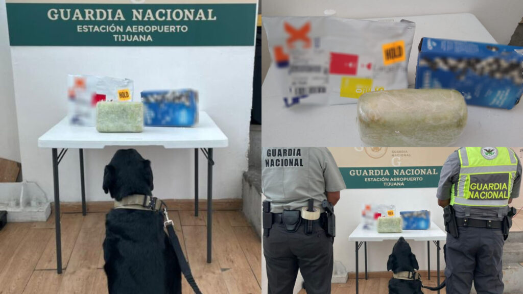 Binomios caninos de GN localizan marihuana en caja de galletas en Tijuana