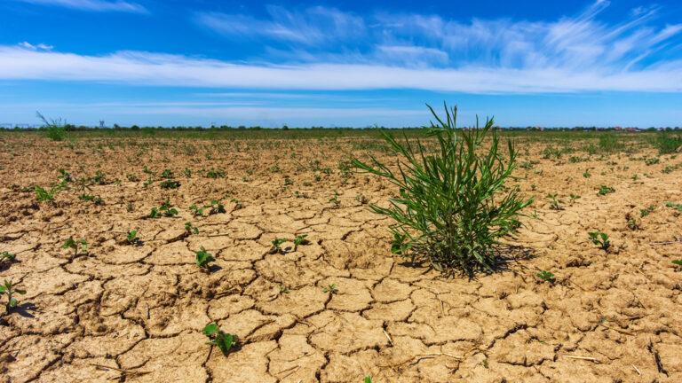 Plantea PT reformas a la Ley de Aguas Nacional para reducir efectos de la sequía en zonas áridas y semiáridas Foto: Internet