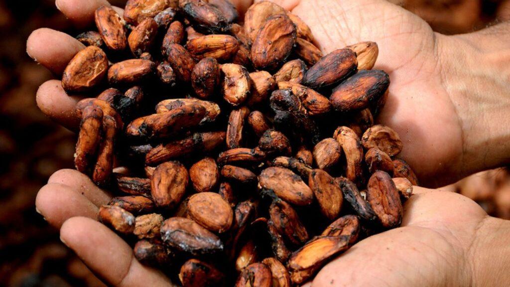 Buscan senadores que industria del cacao se sume a la recuperación económica