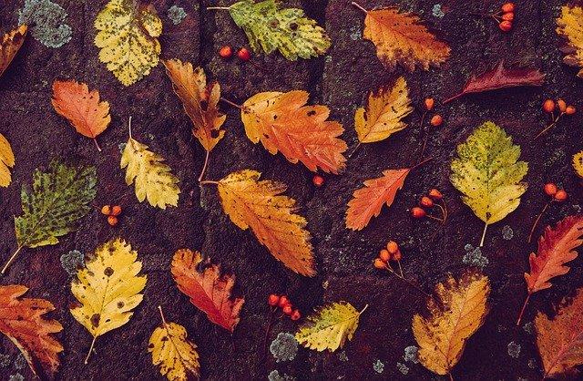 ¿Cuándo inicia el otoño en México y cuál es su significado?